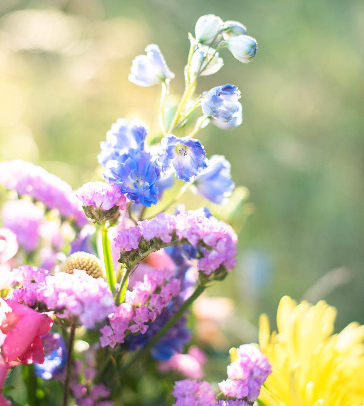 Blumenstrauß im Gegenlicht
